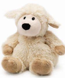 intelex sheep